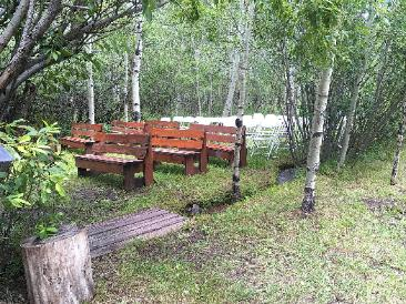 Secluded Aspen Grove Ceremony Site